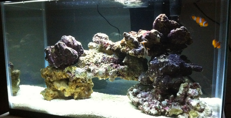Best Live Rock For Nano Tank