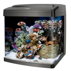 best nano tank for salt water