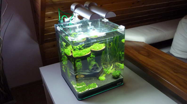 Best Nano Tank For Beginners