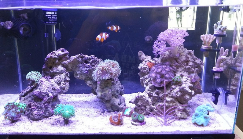 Best Wave Controller For Nano Reef