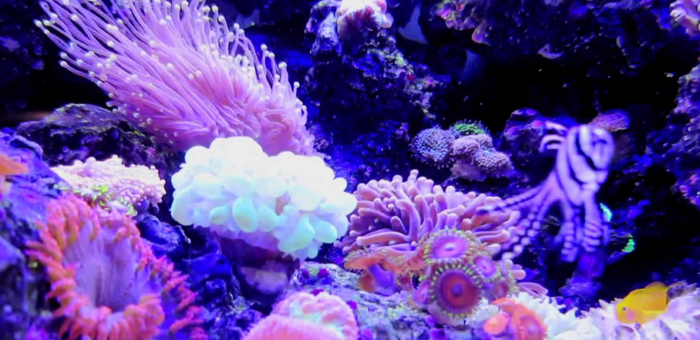 best-all-in-one-nano-reef-tanks