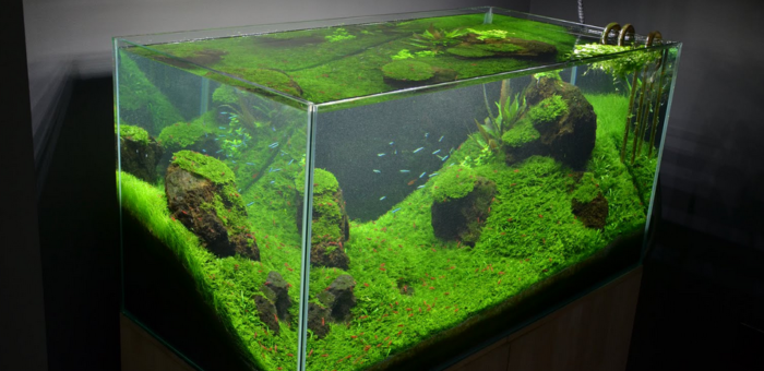best rimless fish tank for the money