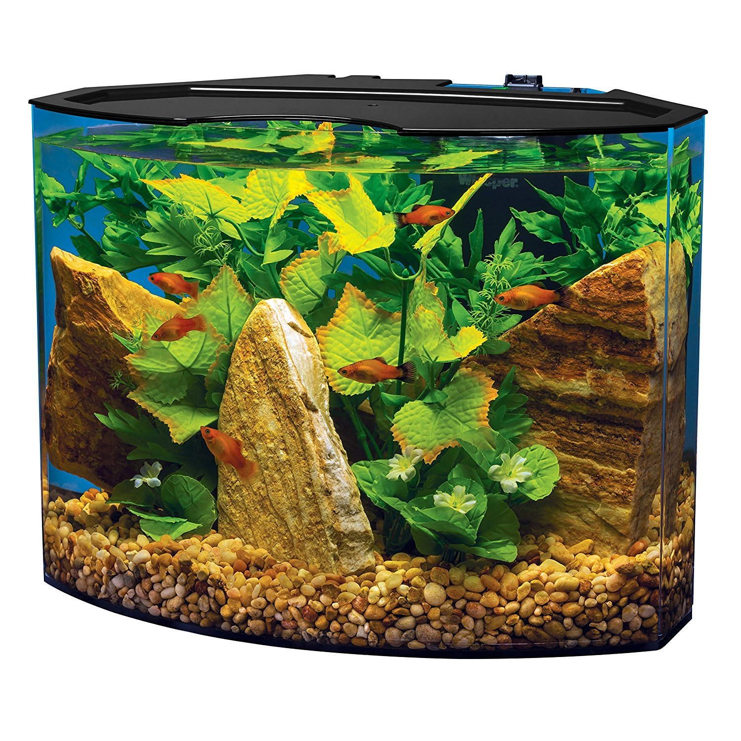 tetra 5 gallon led aquarium kit review