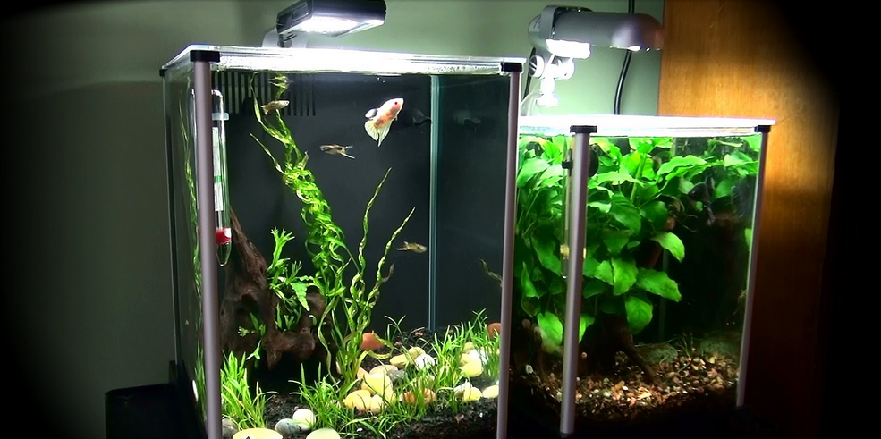 Fluval Spec V vs Flex 9 – Which Model Wouldn't Kill Your Fish