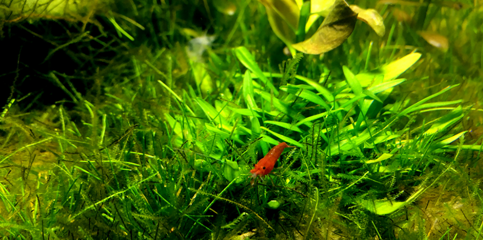 smallest shrimp tank