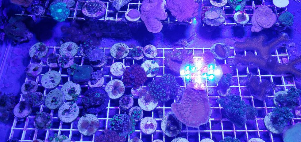 Best Led Lights For Frag Tank