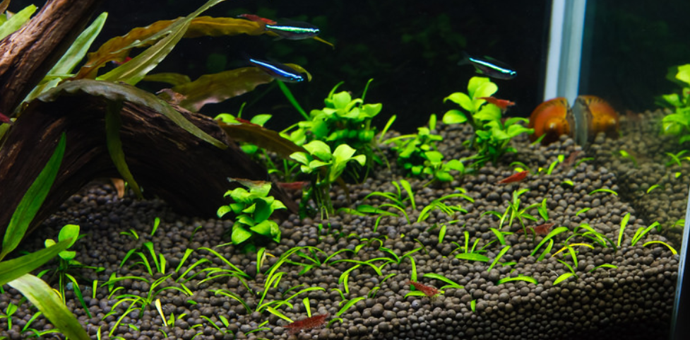 Best Nano Tank for Shrimp